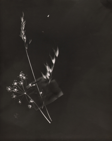 Claude Tolmer, Photogram (Inkwell & Flowers), ​c. 1933. White silhouettes on a black background of three flowers and a small vessel.
