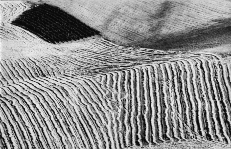 Mario Giacomelli, On Being Aware of Nature, 1954–2000. Abstract farmland landscape with linear patterns.