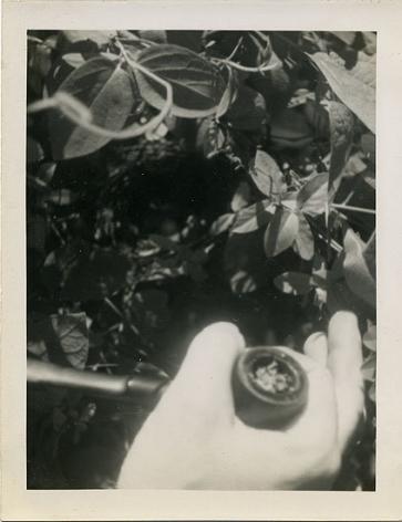 Pipe in Hand, 1950s, 4 x 3 in.