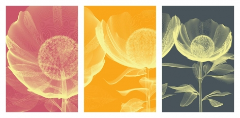 Poppies & Lillies Edition