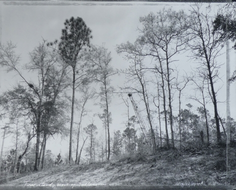 West Of Tallahassee by Mark Klett