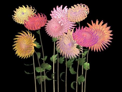 Jennifer Steinkamp. Hurdy Gurdy Man (Chrysanthemums) (Ed. 4/6), 2006. Video installation, Dimensions variable.Courtesy of the artist & PKM Gallery.