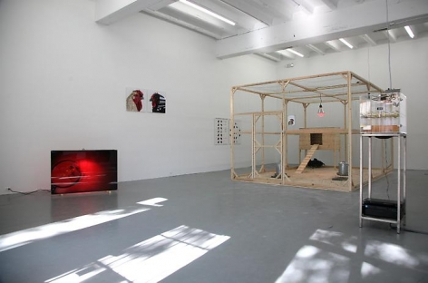 Koen Vanmechelen_Cosmopolitan Chicken Project Installation view: CONNERSMITH.
