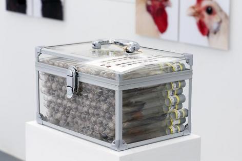 KOEN VANMECHELEN Under Pressure - C.C.P. (detail) 2013, test tubes, labels, feathers, plexiglass, 6 x 10.25 x 46.5 inches.