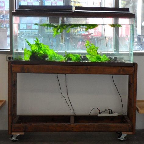 SARAH ALLISON Photosynthetic Sea Slugs 2011, aquarium, sea slugs, dimensions variable