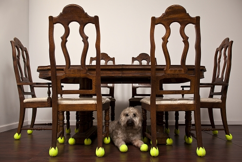 GINNY HUO Mothers Table 2011, table, dog, tennis balls, dimensions variable