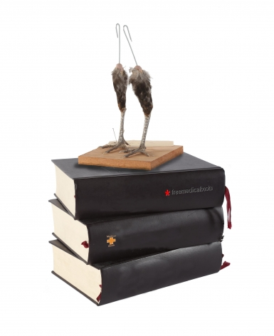 Koen Vanmechelen Natural Knowledge encyclopedia of human rights, chicken feet (Red Jungle Fowl), wood, 19.75 x 12 x 8 inches