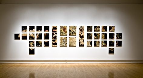 SELIN BALCI Contamination 2012, microbial growth on boards, dimensions variable