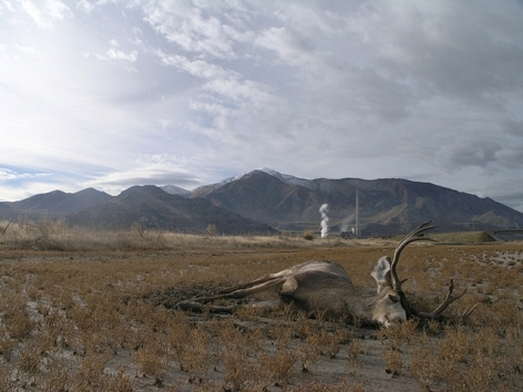 JULEE HOLCOMBE The Buck 2006, c-print, 23 x 25 inches