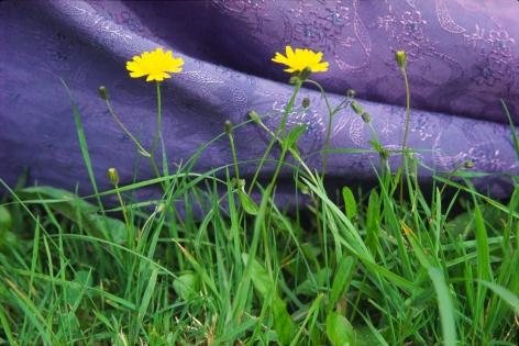 Susan MacWilliam  Garden Series: Dress and Dandelions  2001/2006, digital print, 16 x 24 inches, ed: 5.