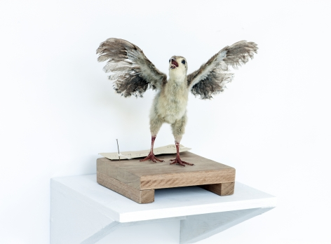 KOEN VANMECHELEN Leaving Paradise 2013, taxidermied Red Jungle Fowl (chick), wood, 8 x 8 x 8 inches