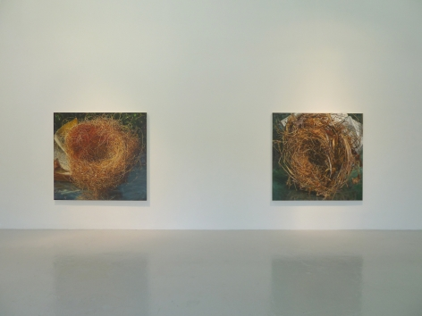 Installation View of Gail Roberts: Entanglement