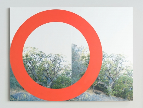 James Hyde RED TREE, 2015