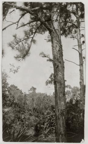 Ken Gonzalez-Day Unidentified African American man, 1928 Erased Lynchings Set III, 2006-2019 Archival injet print on rag paper mounted on cardstock 6 x 4.5 in