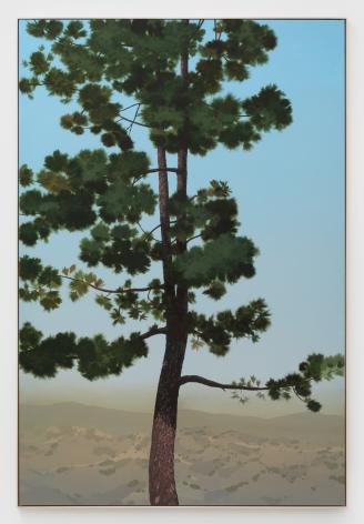 Jake Longstreth, In Glendale (Canary Island Pine 1), 2019