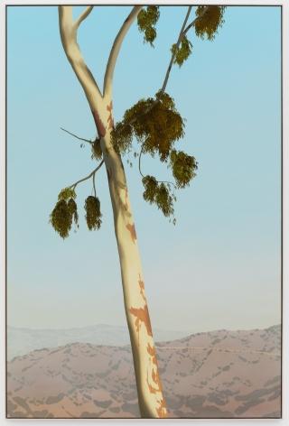 Jake Longstreth, In Glendale (Eucalyptus 5), 2020. Oil on muslin, 85 x 57.25 in, 213.4 x 144.8 cm (framed). (JLO20.004)