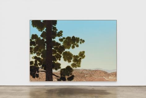 Jake Longstreth Sand Canyon (Pine 2), 2021 oil on muslin 84 x 120 in 85 x 121 x 2.5 in, framed (JLO20.061)