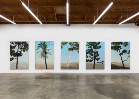 "Installation View of ""In Glendale (Canary Island Pine 2)"", ""In Glendale (Fan Palm)"", ""In Glendale (Eucalyptus)"", ""In Glendale (Canary Island Pine 1)"", and ""In Glendale (Live Oak 1)"""