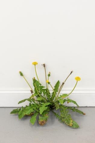 Tony Matelli Weed, 2021 Painted bronze 13 1/2 x 19 x 12 1/2 in 34.3 x 48.3 x 31.8 cm (TMA21.001)