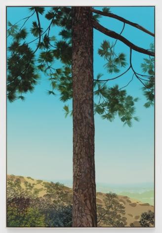 Jake Longstreth, In Glendale (Pine 3), 2020. Oil on muslin, 60 x 40 in, 152.4 x 101.6 cm, (JLO20.017)