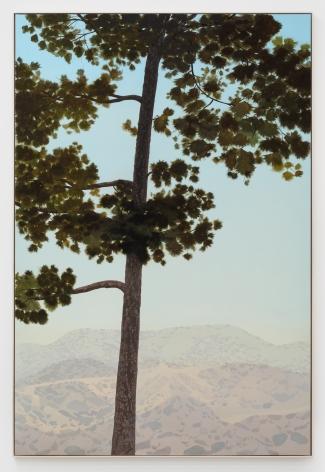 Jake Longstreth, In Glendale (Canary Island Pine 2), 2019