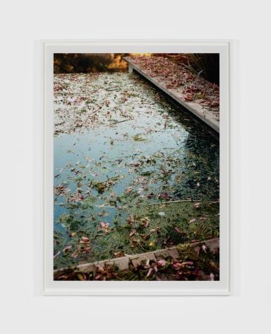Margarete Jakschik Morning Splendour, 2019 color photograph Ed. 1/5 (+2 AP) 37 x 27.75 inches 94 x 70,5 cm (MJA20.004)