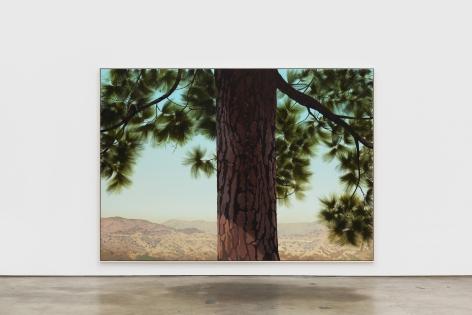 Jake Longstreth Sand Canyon (Pine 1), 2021 oil on muslin 84 x 120 in 85 x 121 x 2.5 in, framed (JLO20.060)