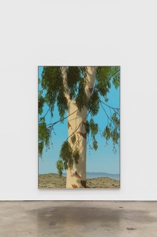 Jake Longstreth Sand Canyon (Eucalyptus 2), 2021 oil on muslin 84 x 56 in 85 x 57 x 2.5 in, framed (JLO20.084)