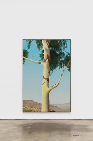 Jake Longstreth Sand Canyon (Eucalyptus 3), 2021 oil on muslin 84 x 56 in 85 x 57 x 2.5 in, framed (JLO20.083)