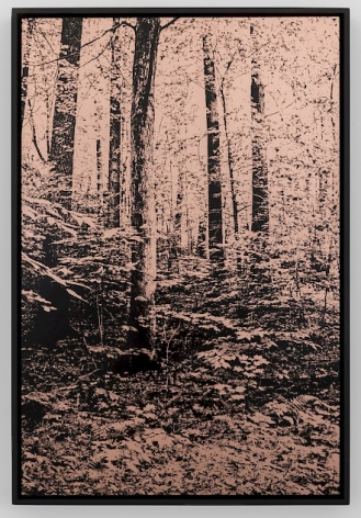 Copper etching of trees in a wooded landscape