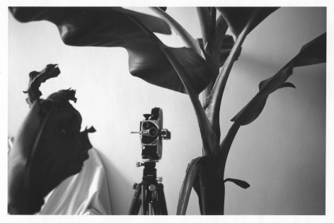 A black-and-white photograph of an analog film camera nestled among tall leaves, inside