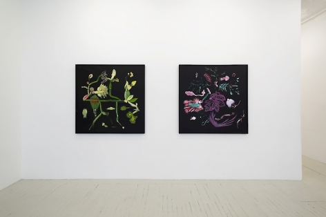 Installation view of 2 botanical paintings by Thomas Kovachevich at Callicoon Fine Arts