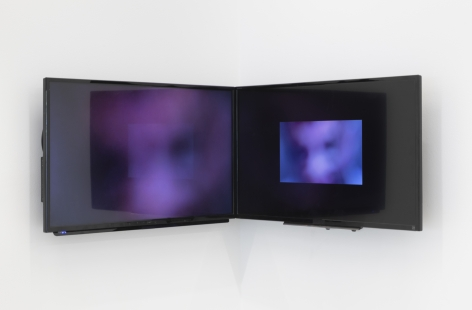 the flat panel monitors installed edge to edge in a corner of the gallery showing images of snakes