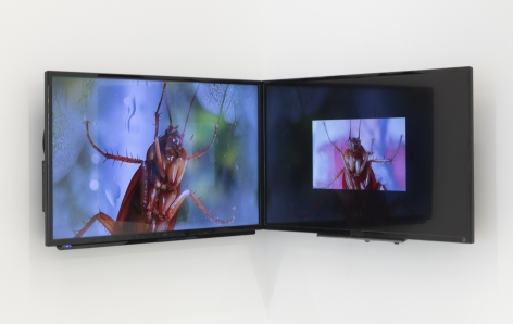 two flat panel monitors installed in a corner showing images of cockroaches up close