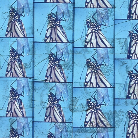 A single slide from Luther Price's video projection. There are four columns that show a butterfly perched on a piece of plastic with a blue background. There are numerous abstract details throughout the slide that show Luther's process.