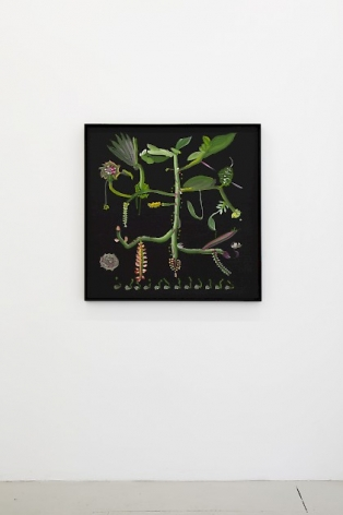 Installation view of a botanical painting by Thomas Kovachevich at Callicoon Fine Arts