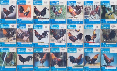 A detail of color-printed covers of Gamecock magazine, which are bordered by blue and white at the top and bottom of each magazine. The chickens on the covers remain in side profile, but are in color.