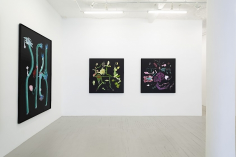 Installation view of 3 botanical paintings by Thomas Kovachevich at Callicoon Fine Arts
