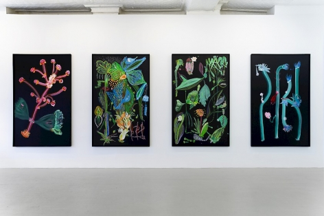 Installation view of 4 botanical paintings on black backgrounds by Thomas Kovachevich