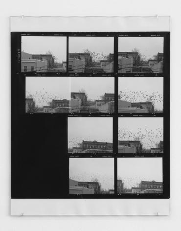 A photograph of a single roll of film (10 frames), all black and white, that depict a flock of pigeons circling the roofs of brownstones in Brooklyn.