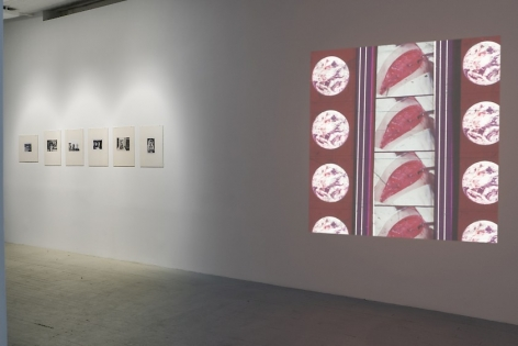 A view of one wall which on the left has 6 black and white photographs by Hervé Guibert in cream mattes and on the right has a projection by Luther Price depicting several open wounds, repeated.