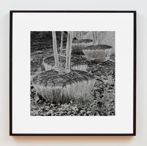 Su-Mei Tse Trees and Roots #1, 2010