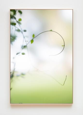 Su-Mei Tse Plants and Shades #2, 2017
