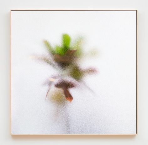 Su-Mei Tse Plants and Shades #1, 2017