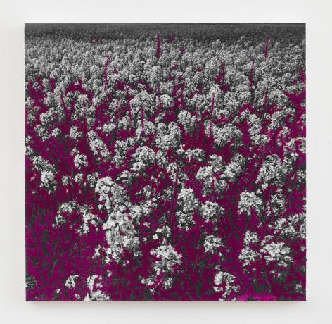 "Berend Strik, ""Magenta Garden"", 2017, stitched c-print on tyvek, 20 inches by 20 inches."