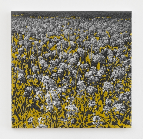 """Berend Strik, """"Yellow Garden"""", 2017, stitched c-print on tyvek, 20 inches by 20 inches."""