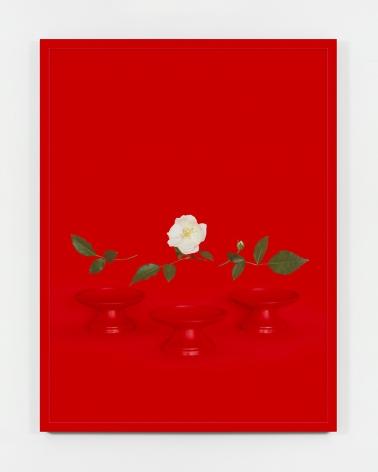 Sarah Charlesworth, Red Bowls (small), 2005