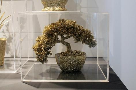 Untitled (bonsai in a box)