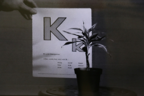 John Baldessari, Teaching a Plant the Alphabet