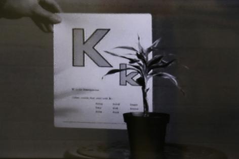 John Baldessari, Teaching a Plant the Alphabet